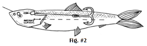 anchovy-classic-fig2.png